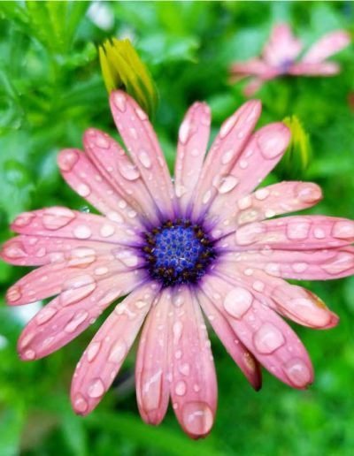 flower-in-the-rain