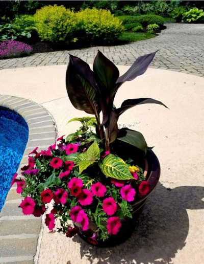 seasonal-flower-pot