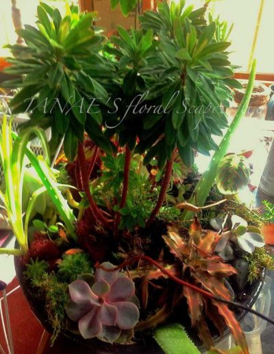 winter-indoor-garden